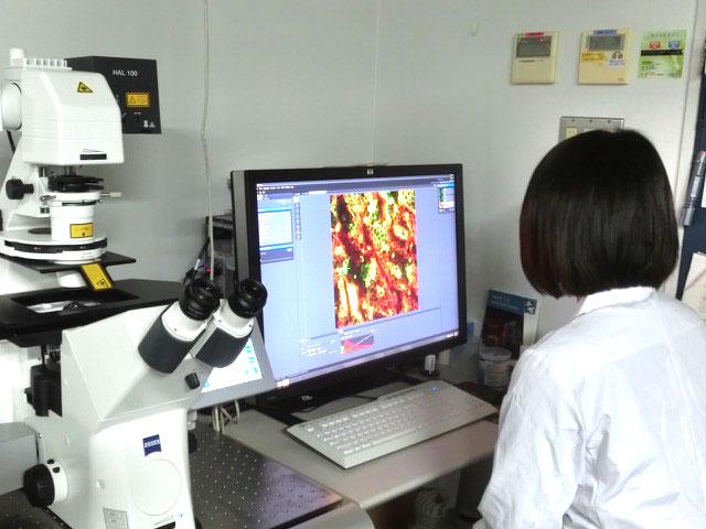 顕微鏡を使って薬剤の効果を確認しています。