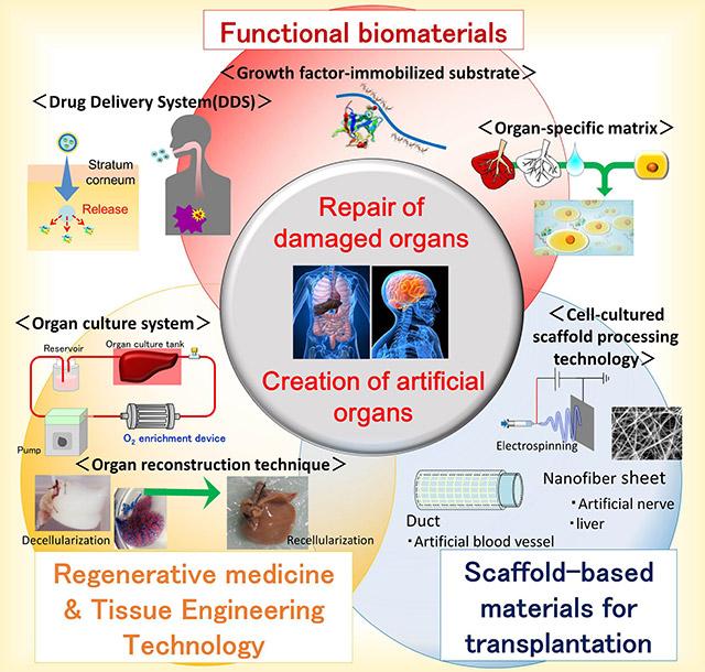 Functional biomaterials